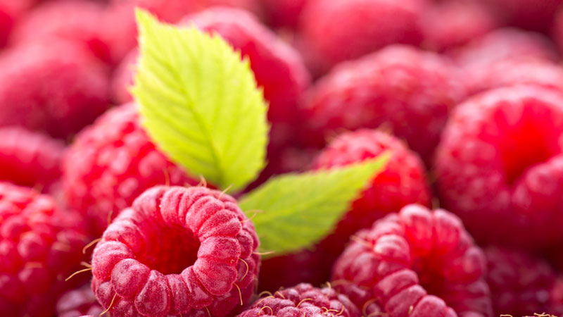 Base oil of the month - Raspberry Seed