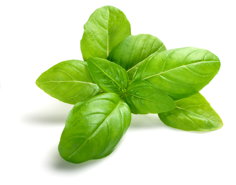 Essential oil of the month - Basil