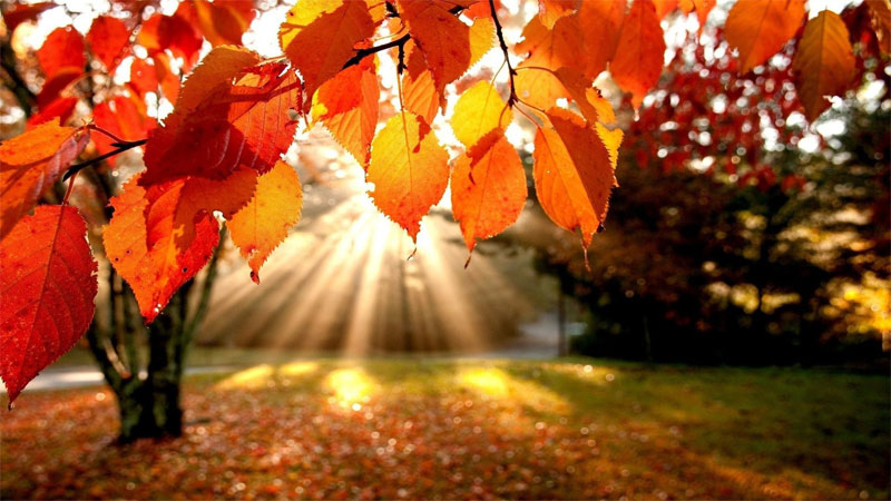 Autumnal essential oils for embracing change